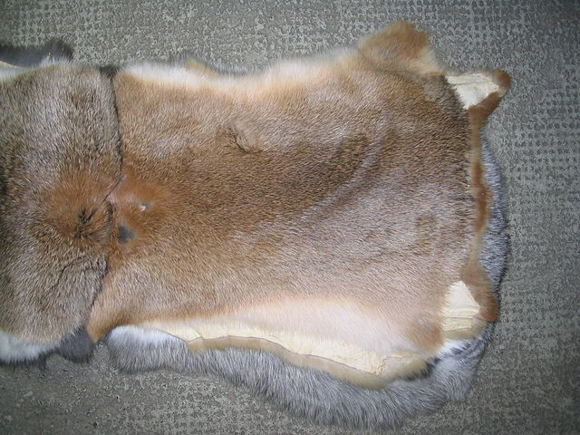 Natural rabbit fur. Source: Wikimedia Commons.