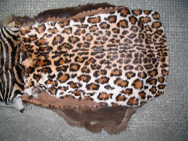 Rabbit fur dyed to resemble leopard fur. Source: Wikimedia Commons.